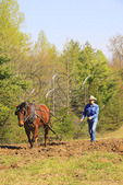Farmer and horse plowing field at Spring Planting Festival, Lora Blevins Homesite, Bandy Creek Area, Big South Fork National River and Recreation Area, Oneida, TN