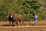 Farmer with mule team plowing field at Spring Planting Festival, Lora Blevins Homesite, Bandy Creek Area, Big South Fork National River and Recreation Area, Oneida, TN