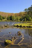 Underwater tree roots, Spruce Knob Lake, Spruce Knob-Seneca Rocks National Recreation Area, Monongahela National Forest, Judy Gap, West Virginia