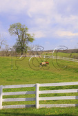 Horses in fenced pasture at Shaker Village of Pleasant Hill, Harrodsburg, Kentucky