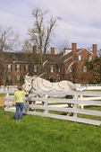 Tourist Pets Work Horses at Shaker Village of Pleasant Hill, Harrodsburg, Kentucky