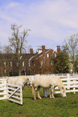 Work Horses in fenced pasture beside Trustees' Office at Shaker Village of Pleasant Hill, Harrodsburg, Kentucky