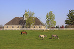 Horses graze in pasture at Donamire Farm in Lexington, Kentucky
