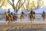 Exercise riders with thoroughbreds enter track during early morning workout at Keeneland Race Course, Lexington, Kentucky