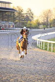 Exercise rider on thoroughbred at early morning workout at Keeneland Race Course, Lexington, Kentucky