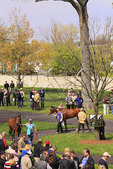 Spectators watch thoroughbreds walk through the paddock prior to a race, Keeneland Race Course, Lexington, Kentucky
