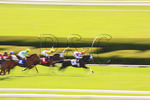 Thoroughbreds speed toward the finish line, Spring horse races, Keeneland Race Course, Lexington, Kentucky