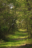 Section of original historic Wilderness Road, Levi Jackson State Park, London, Kentucky