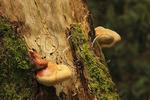 Fungi growing on tree, Hemlock Garden Preserve and Trail, Pine Mountain State Resort Park, Pineville, Kentucky