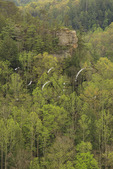 View into Clifty Wilderness from Sky Bridge Viewing Area, Red River Gorge Geological Area, Slade, Kentucky