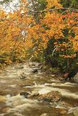 Brook at Texas Falls, Breadloaf, Vermont