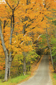 Country Road, South Pomfert, Vermont