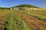 Cut alfalfa on farm near Dayton in the Shenandoah Valley, Virginia
