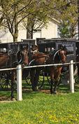 Horses and Buggies Wait at Mennonite Church in Dayton, Shenandoah Valley, Virginia