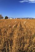 Farm and soybean field near Dayton in Shenandoah Valley, Virginia