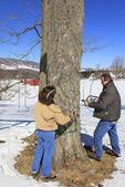 Install Tubing, Maple Sugar Farm, Hightown, Virginia