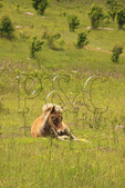Wild colt along Appalachian Trail, Grayson Highlands State Park, Virginia