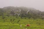 Wild horses along Appalachian Trail, Mount Rogers National Recreation Area, Virginia