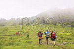Wild horses and Hikers along Appalachian Trail, Mount Rogers National Recreation Area, Virginia