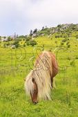 Wild horse along Appalachian Trail, Mount Rogers National Recreation Area, Virginia