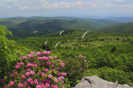 Rhododendron along Appalachian Trail, Mount Rogers National Recreation Area, Virginia
