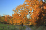 Colorful fall trees along road near New Hope in Augusta County, Virginia