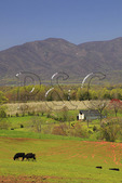 Apple Orchard, Roseland, Nelson County, Virginia