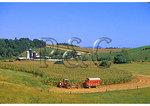 Corn Harvest, Bridgewater, Shenandoah Valley of Virginia