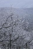Frost on Trees, Appalachian Trail, On Hightop, Shenandoah National Park, Virginia