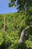 Lewis Falls, Shenandoah National Park, Virginia
