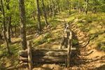 Breastworks along Confederate Breastworks Interpretive Trail, Shenandoah Mountain, West Augusta, Virginia