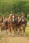 Man drives six horse bell team at Charlie Lindsay Farm, Greencastle, Pennsylvania