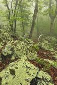 Appalachian Trail, Sawmill Ridge, Shenandoah National Park, Virginia