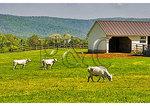 Loudoun County, Virginia