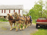 Charlie Lindsay drives six horse bell team, Greencastle, Pennsylvania