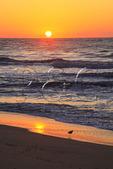 Shorebird on the beach at sunrise, Cape Hatteras National Seashore, Outer Banks, Buxton, North Carolina, USA