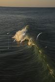 Ocean waves, Kitty Hawk, North Carolina, USA