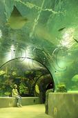 Visitor inside the tunnel in the Red Sea Aquarium at the Virginia Aquarium and Marine Science Center, Virginia Beach, Virginia, USA