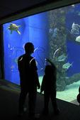 Family looks at sea creatures inside aquarium at Virginia Aquarium and Marine Science Center, Virginia Beach, Virginia, USA