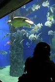 Visitor looks at sea creatures inside aquarium at Virginia Aquarium and Marine Science Center, Virginia Beach, Virginia, USA