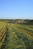 New cut Hay at a Farm near Bridgewater in the Shenandoah Valley of Virginia