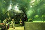 Visitors inside the tunnel in the Red Sea Aquarium at the Virginia Aquarium and Marine Science Center, Virginia Beach, Virginia, USA