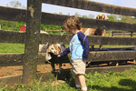 Child pets goat at Temple Hall Regional Park in Leesburg, Virginia