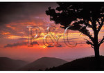 Sunset, Sawmill Run Area, Shenandoah National Park, Virginia