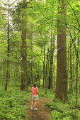 A hiker admires the tall hemlock trees in Cathedral State Park, Brookside, West Virginia, USA