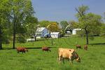 Farm near Locust Grove, Maryland, USA