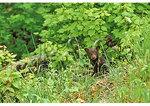 Bear Cub, Shenandoah National Park, Virginia