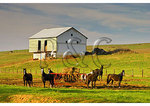 Horses and Barn, Springhill, Shenandoah Valley, Virginia