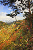 Overlook Trail, Cloudland Canyon State Park, Rising Fawn, Georgia, USA