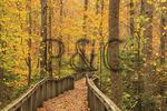 Talmadge Butler Boardwalk Trail, Azalea Cascade Trail, DeSoto State Park, Fort Payne, Alabama, USA